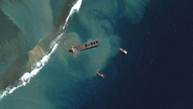 Photo of Mauritius Oil Clean-up Turns Focus From Ship To Shore